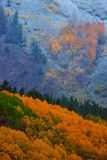 A Fall Dusting stock photo