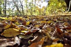 Fall-Eindruck Stockbild