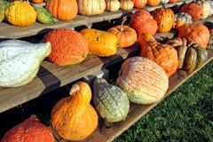 Fall-Ernte-dekoratives Gemüse auf Bauernhof-Standplatz Stockbild