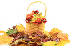 Fall Etude. Royalty Free Stock Photo
