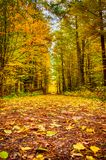 Autumn on forest path IV Stock Images