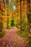 Autumn on forest path V Stock Photos