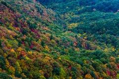 Fall färbt North Carolina 2014 Lizenzfreie Stockfotos
