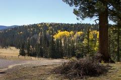 Fall färbt Waldblätter Arizona lizenzfreies stockfoto
