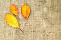 Fall färbte Blätter am Sackleinen Lizenzfreie Stockfotografie