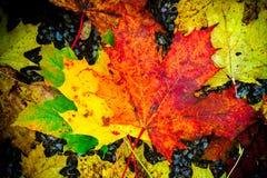 Fall färbte foilage Blätter auf dem Boden Lizenzfreie Stockfotografie