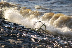 Fall för hög vind Royaltyfria Foton