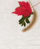 Fall fabric. Leaves on a textured fabric Royalty Free Stock Photo