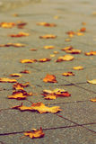 Fall. En yellow maple liaves in the autumn day Stock Photo