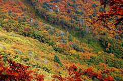 Fall at the Far East Russia Royalty Free Stock Photography