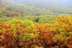 Fall at the Far East Russia Stock Photography