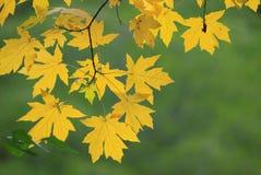 Fall-Farbe Lizenzfreies Stockfoto