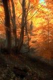 Fall-Farbe Stockfoto