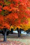 Fall-Farbe in Nashville stockfoto