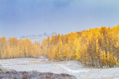 Fall-Farbe und Schnee in Colorado stockfotografie