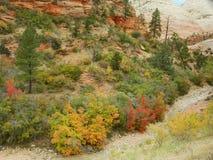 Fall-Farbe, Zion Stockbild