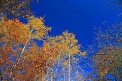 Fall-Farben Stockfotografie
