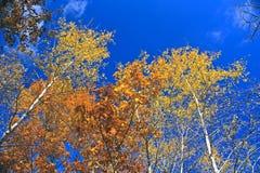 Fall-Farben Lizenzfreies Stockfoto