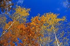 Fall-Farben Lizenzfreie Stockbilder
