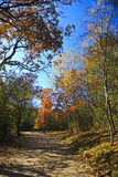 Fall-Farben Stockbilder