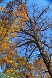 Fall-Farben Lizenzfreie Stockfotografie