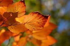 Fall-Farben Stockbild