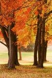 Fall-Farben Stockfoto