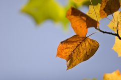 Fall-Farben Lizenzfreie Stockfotos