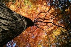 Fall-Farben Stockfotos