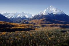Fall-Farben in Alaska Stockfotos