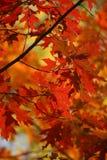 Fall-Farben-Blätter Stockfotografie