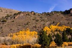 Fall-Farben in der östlichen Sierra Stockfotografie