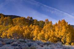 Fall-Farben in der östlichen Sierra Stockbild