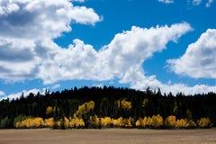 Fall-Farben an der Grand- Canyonnordfelge lizenzfreies stockfoto