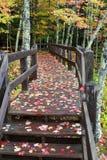 Fall-Farben in der Michigan-Oberleder-Halbinsel stockbild