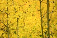Fall-Farben in der Sierra Berge Kalifornien Lizenzfreie Stockfotos