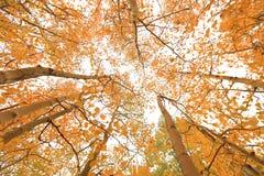 Fall-Farben in der Sierra Berge Kalifornien Lizenzfreie Stockfotografie