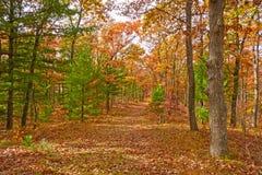Fall-Farben in einem Mischwald lizenzfreies stockbild