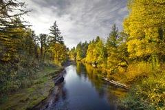 Fall-Farben entlang Thomas-Nebenfluss Oregon Stockfotografie