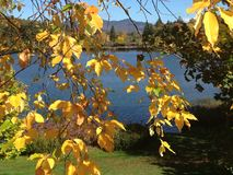 Fall-Farben im Lake Placid, New York Stockfotografie