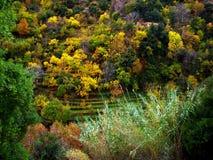 Fall-Farben im Libanon Stockfotografie