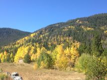 Fall-Farben in Rocky Mountains Stockfotos