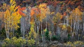 Der Adirondacks im Herbst Stockbilder