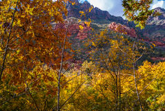 Fall-Farben Sedona Arizona USA stockfotos