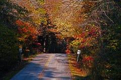 Fall farbige Bäume Lizenzfreie Stockfotos