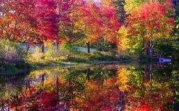 Fall farbige Bäume entlang Fluss Lizenzfreie Stockfotos