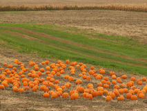 Fall farm. Farm in the fall with pumpkins and corn Royalty Free Stock Photo