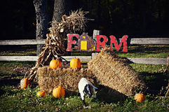 Fall Farm Display. A fall farm display against a fence with the words farm spelled out, with haystacks, pumpkins, corn shucks and a lamb Royalty Free Stock Image