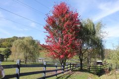 Fall at the farm Royalty Free Stock Photo