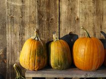 Fall: farm stand sunlit pumpkins stock photography